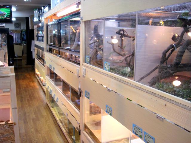 爬虫類 専門 店